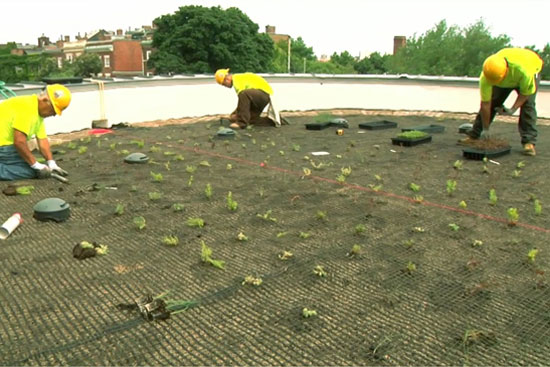 BU-Green-Roof